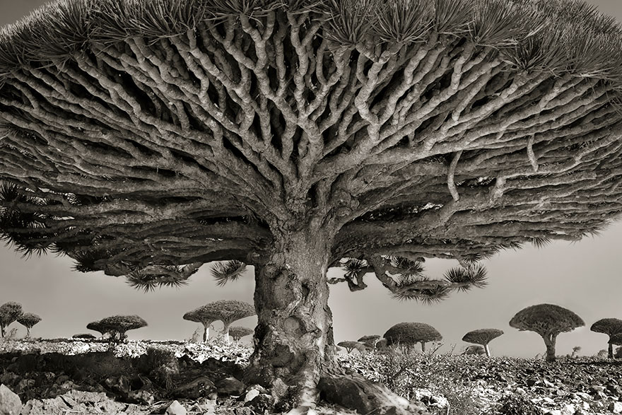http://www.boredpanda.com/ancient-tree-photography-beth-moon/