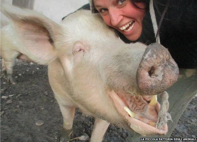 Fedy & pig