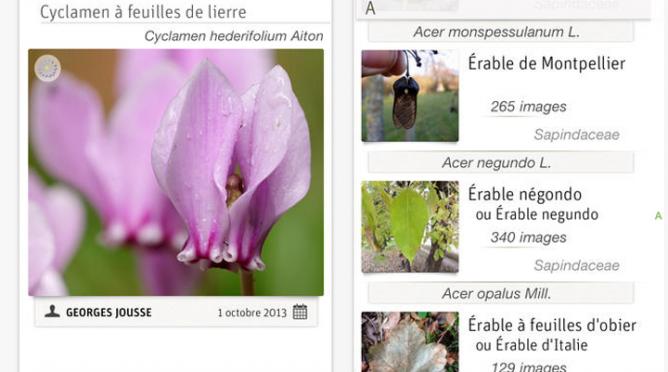 France : Partage – Une application mobile gratuite pour identifier les plantes, les écorces et les fleurs