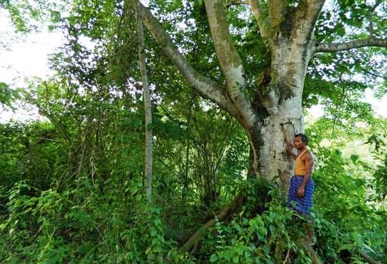 Inde : En 30 ans, il a reboisé et transformé seul un banc de sable en forêt où viennent se réfugier les animaux menacés