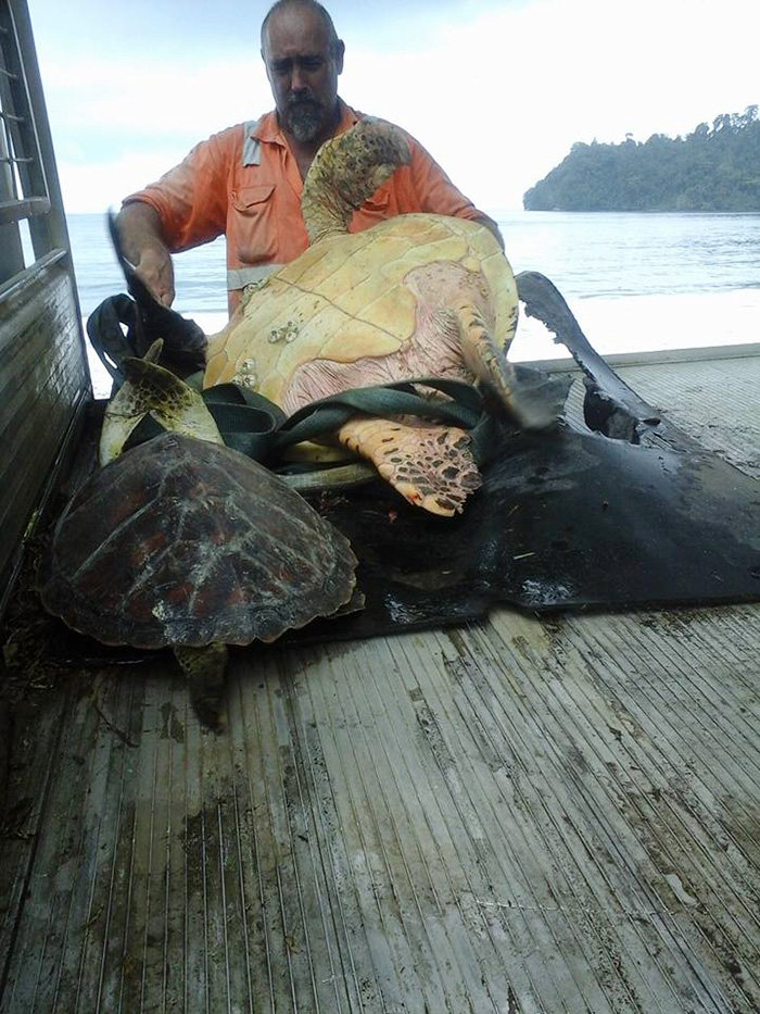 http://www.boredpanda.com/man-buys-turtles-food-market-releases-to-sea-rescue-arron-culling/