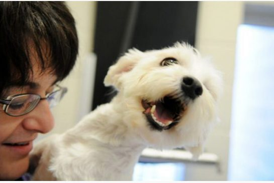 http://www.metronews.ca/news/toronto/2013/05/16/durham-humane-society-gets-25000-from-mystery-man.html