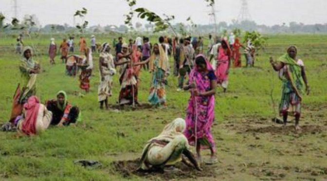 Breaking News : Le record de reboisement battu en Inde – 50 millions d'arbres replantés en une seule journée !