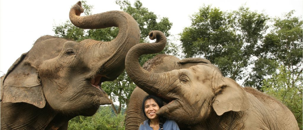 http://www.elephantnaturepark.org/