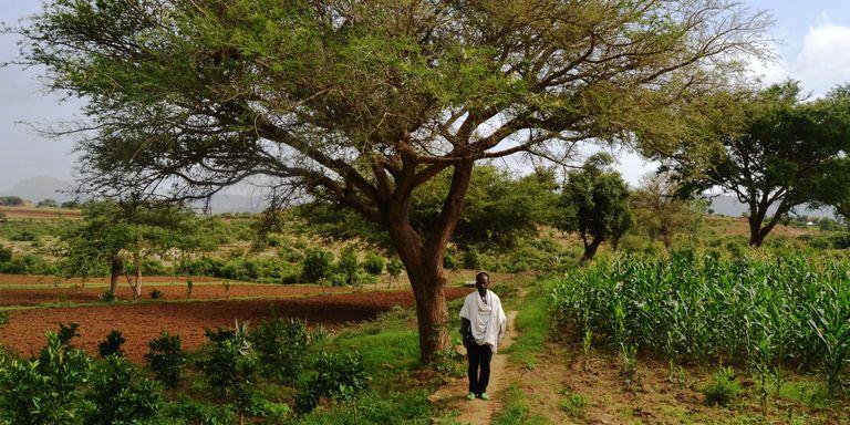 Credits Emilie Wilbercq http://www.lemonde.fr/afrique/article/2016/07/28/le-village-ethiopien-qui-ne-craint-plus-ni-la-secheresse-ni-l-exode_4975604_3212.html