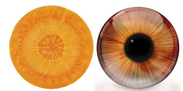 celeri-oeil