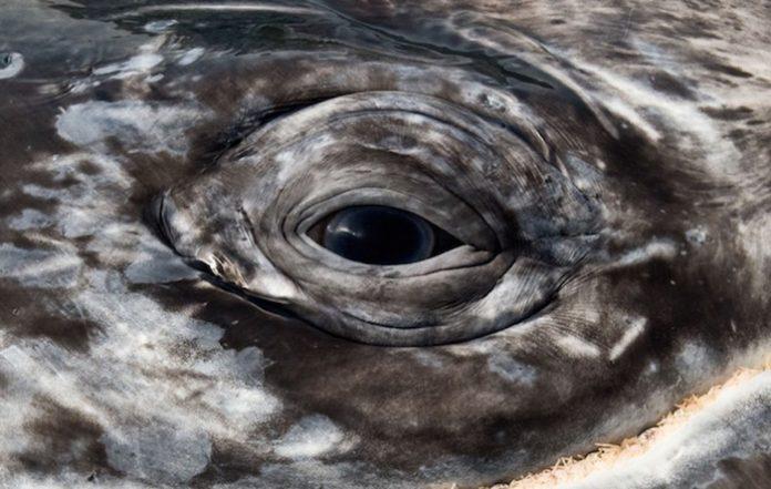 http://positivr.fr/swanny-christopher-swann-photographe-baleine-dauphin/