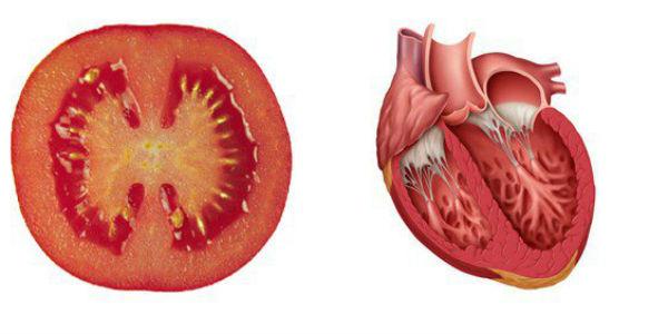 tomate-coeur1