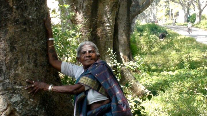 http://www.hellodemain.com/environnement/en-inde-la-mere-des-arbres-centenaire-337.html