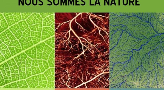 Ressemblances des réseaux sanguins, végétaux et fluviaux… En image !